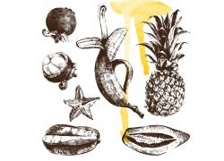 水果素描插画