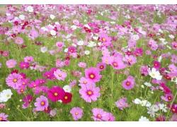 鲜花草地风景