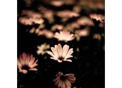 美丽鲜花摄影