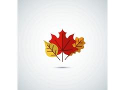 彩色秋天枫叶标志