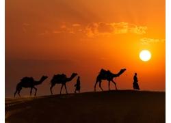黄昏沙漠上的骆驼剪影