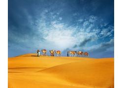 沙漠上的骆驼队
