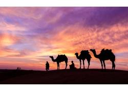 沙漠上的骆驼剪影