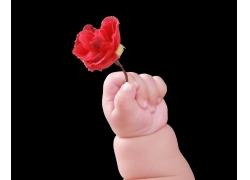 拿玫瑰花的宝定