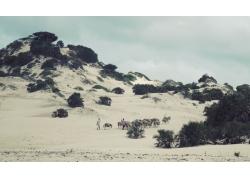 沙漠上的驴