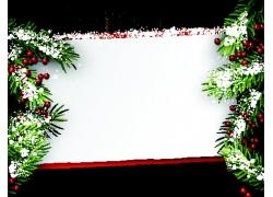 冷杉枝圣诞节背景