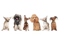 各种犬类动物