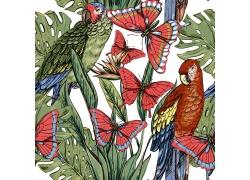 水彩蝴蝶鹦鹉植物图案