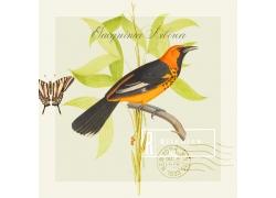 花鸟蝴蝶与邮戳图片