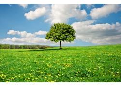 鲜花草地上的树木