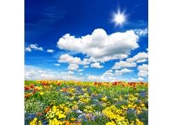蓝天白云鲜花草地