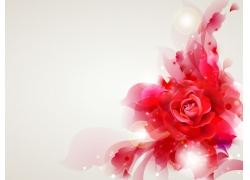 梦幻光斑红色花朵