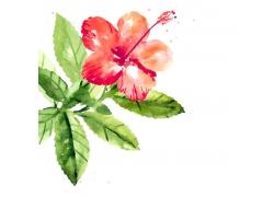 红色植物花朵花卉