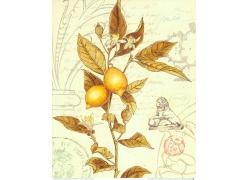 柠檬植物邮戳装饰画图片