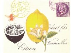 柠檬花卉邮戳装饰画图片
