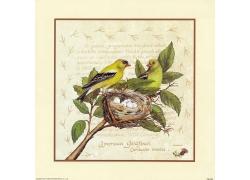 小鸟鸟窝插画图片