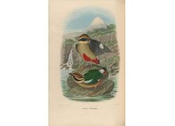 山水风景小鸟插画