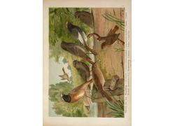 鸟类插画装饰画图片