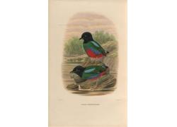 觅食的小鸟插画图片
