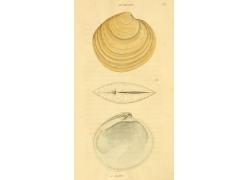 素描与水彩画贝壳无框画图片