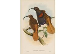 树枝上的鸟类动物插画图片