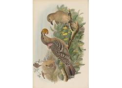 吃蜗牛的鸟类插画图片