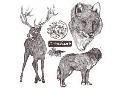 花卉与动物素描图片