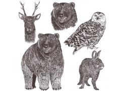 手绘动物素描图片