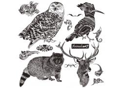 手绘鸟类与陆地动物插画图片
