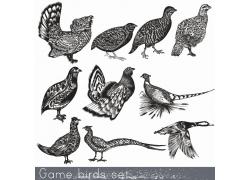 鸟类动物素描插画图片
