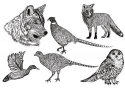 野生动物素描插画图片