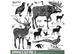 动物剪影与动物素描图片
