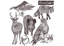 野生动物素描插图图片