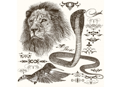 雄狮眼镜蛇蜂鸟素描图片
