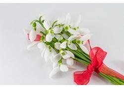 一束白色水仙花