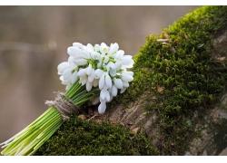 树木上的雪滴花花束