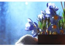 光斑和紫色水仙花
