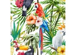 热带鹦鹉植物花朵