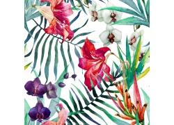 热带植物叶子花朵