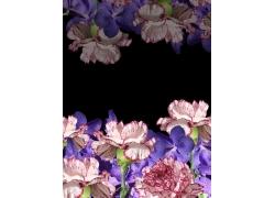 母亲节康乃馨鲜花摄影