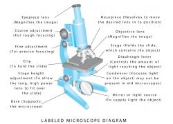 显微镜组成结构