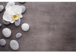 石头上的玉兰花