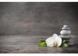 白色玉兰花和石头