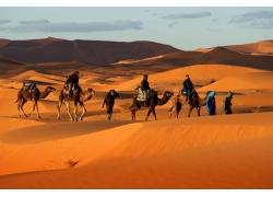 沙漠的骆驼队