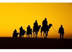 黄昏沙漠骆驼队剪影