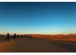 黄昏的骆驼队
