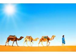 沙漠骆驼和人物摄影
