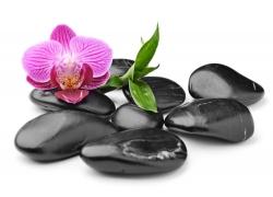 黑色石头上的兰花