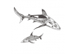 鲨鱼花纹插画图片