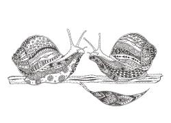 蜗牛花纹插画图片